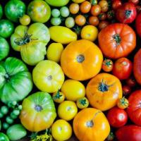 10 pomodori Ciliegini