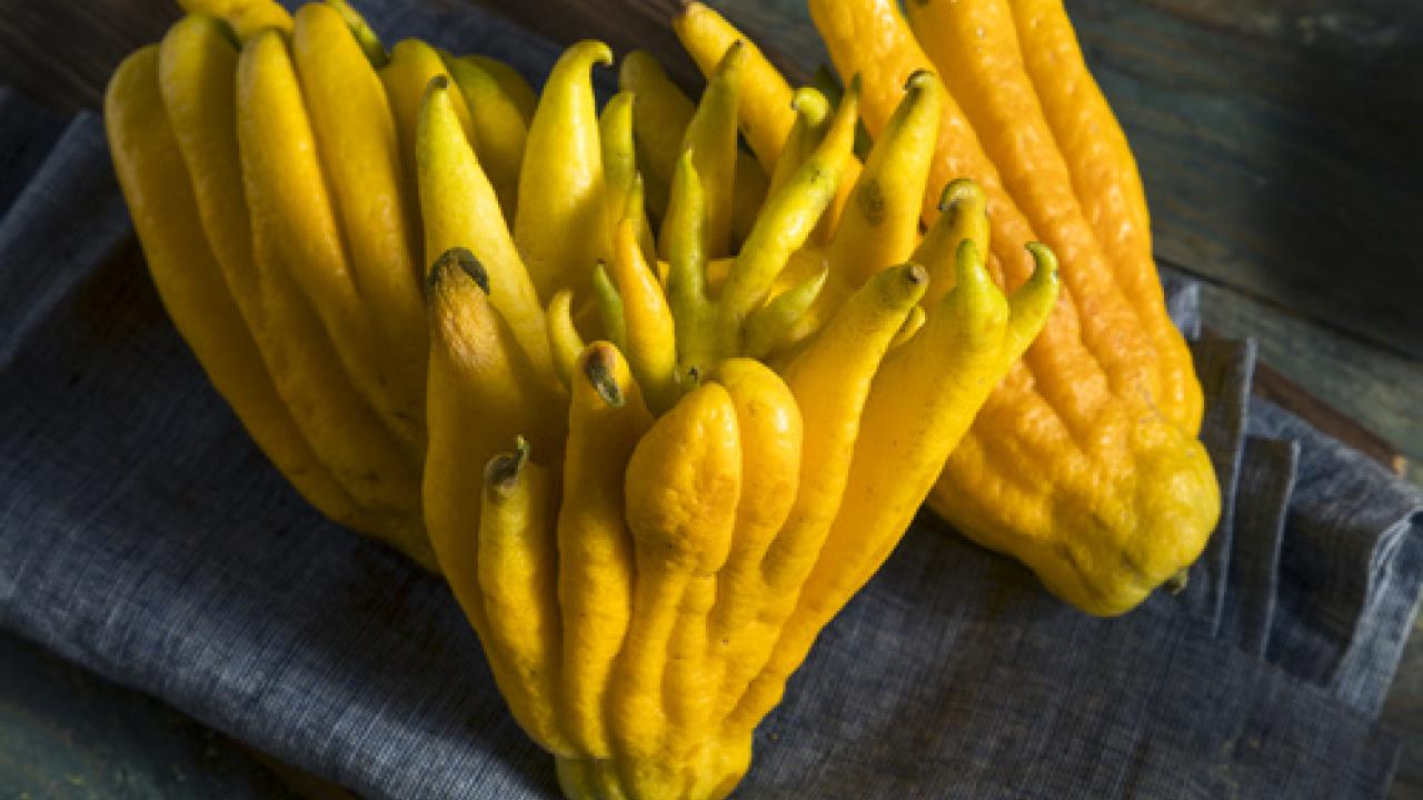 Frutta e verdura le pi belle ed originali del mondo for Mapo frutto