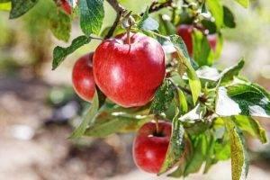 la-classifica-dei-12-alimenti-piu-contaminati-dai-pesticidi-primo-posto-le-mele