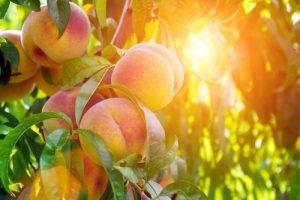La Classifica dei 12 alimenti più contaminati dai pesticidi quarto posto le Pesche