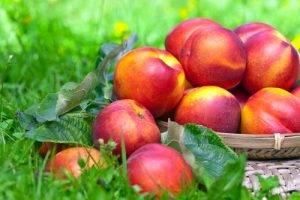 La Classifica dei 12 alimenti più contaminati dai pesticidi sesto posto le Pesche Nettarine.jpg