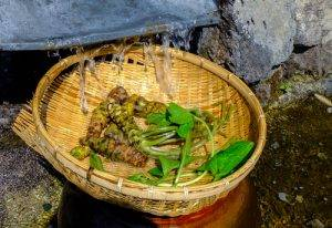 wasabi-foglie-e-radici